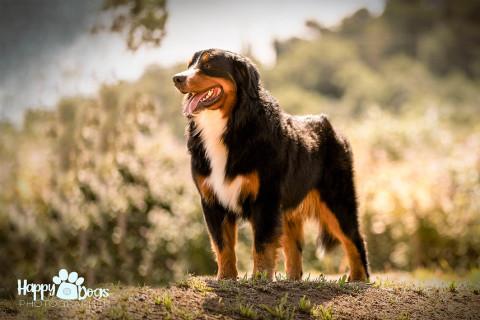 La Dog Photography